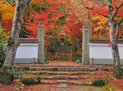 葉室山 浄住寺の紅葉の参道を歩...